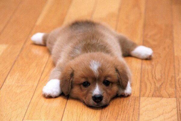子犬の里親探しにおすすめのサイトと使用する際の注意事項