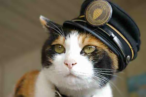 11再警察猫-2