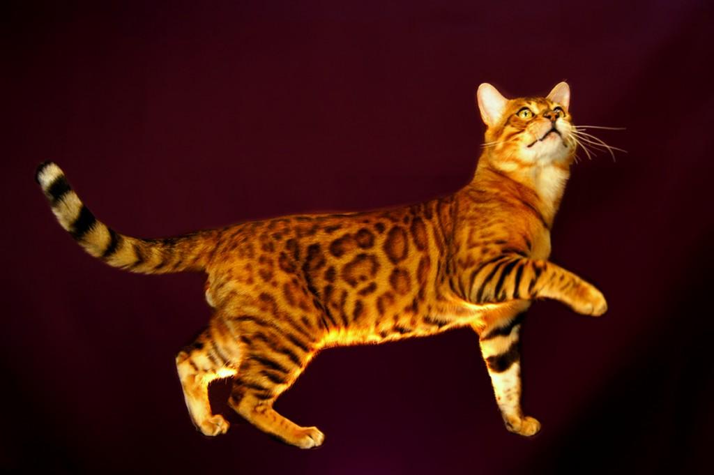 猫の種類の中で飼いやすい猫とは?失敗しない選び方