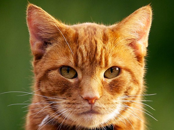 猫の年齢によって気を付けたい食事や遊び方とは