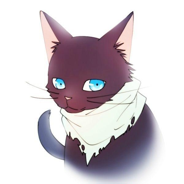 猫の種類あなたはどれだけ知ってる?珍しい猫5種ご紹介!