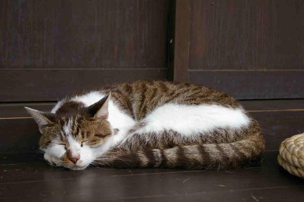 02縁側の猫-2