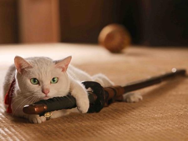 猫の年齢によって接し方を変えたほうがいい理由とは