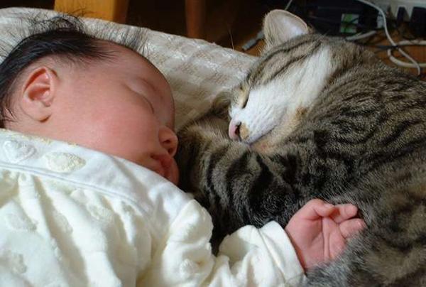 猫と赤ちゃんの同居生活☆安全対策や準備など7つの注意点