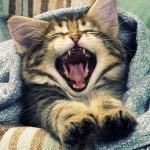 猫の鳴き声から気持ちやサインを読み取る、その意味とは?