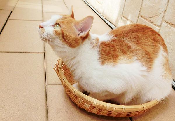 猫アレルギーでも猫を飼えるかも?アレルゲンを抑える方法