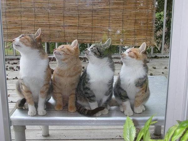 猫ちゃん大好き!まとめて紹介☆たまらない14の画像集