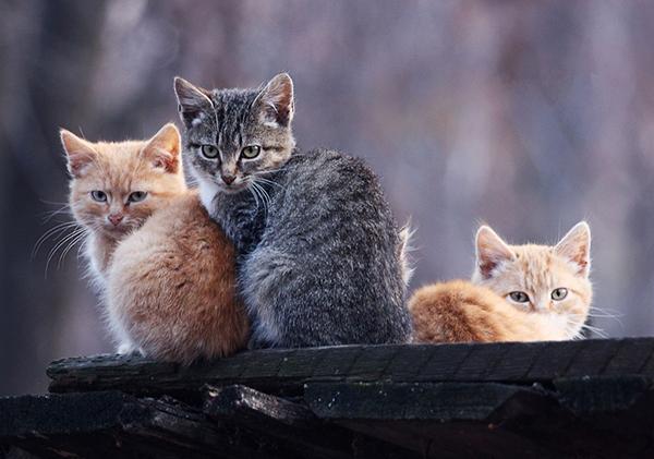 猫の鳴き声☆意味がよくわかるチェックポイント