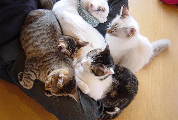 猫カフェといえば名古屋☆癒される!お店オススメ6選