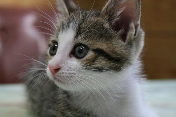 可愛い猫の赤ちゃん☆ぎゅっと抱きしめたい!癒しの画像集