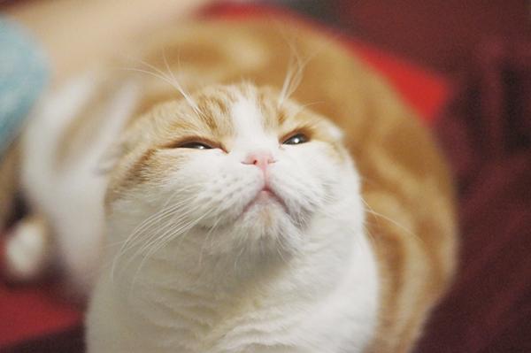 猫を飼うことに決めたら・まず用意しておきたい10のもの