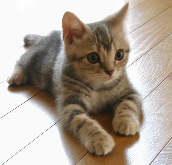 猫をケージ飼いにすることで得られるメリットとデメリット