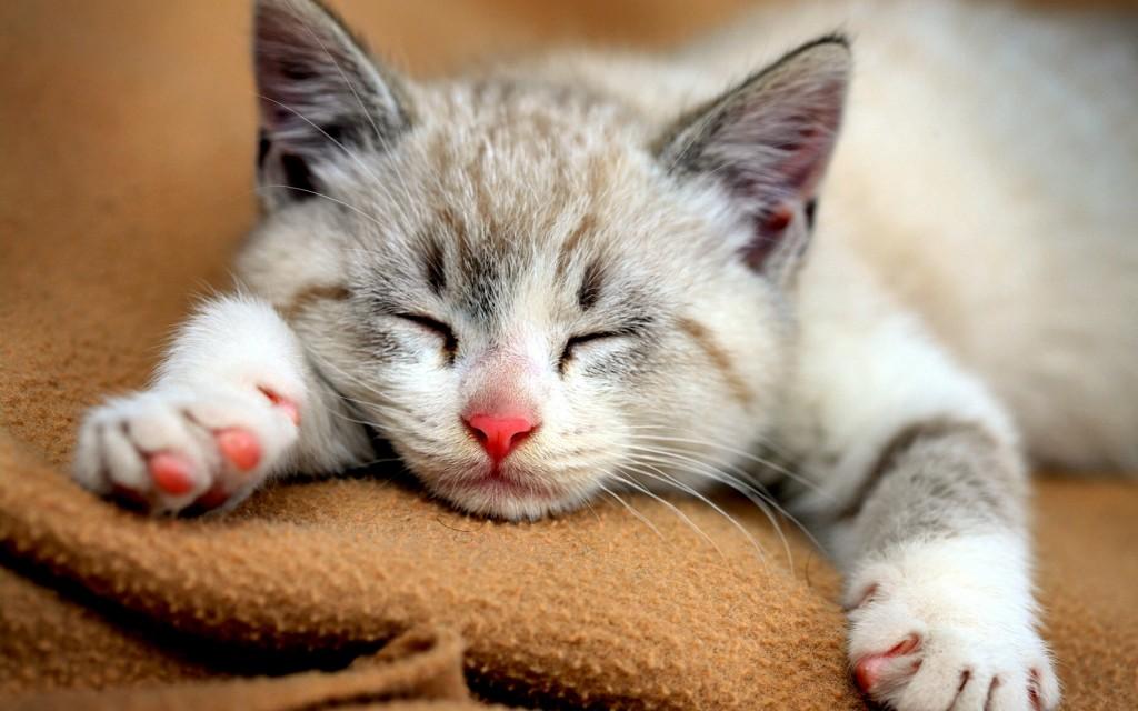 仔猫を飼い始める際、絶対に必要な7つのアイテム