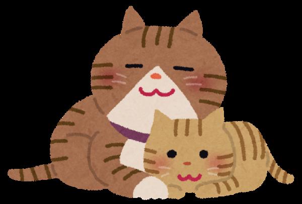 猫の年齢や寿命を知って、楽しく暮らす7つの知恵