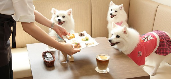 猫カフェから派生した動物カフェの実態に迫る☆