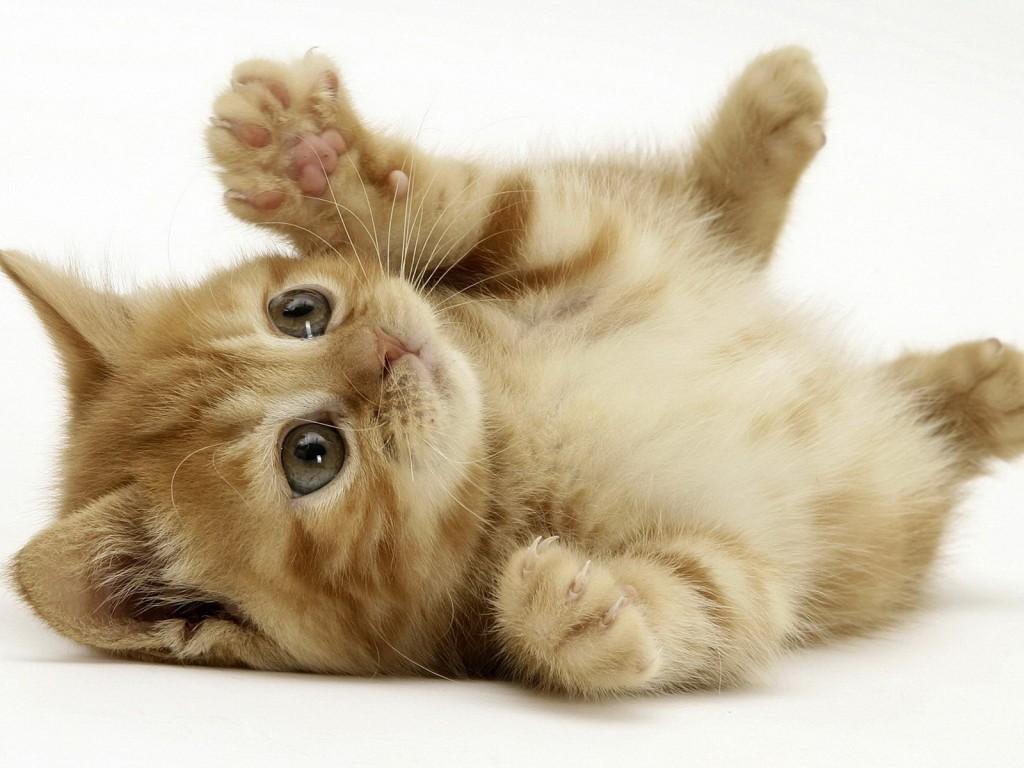 猫の里親探しをするときにやっておきたい前準備