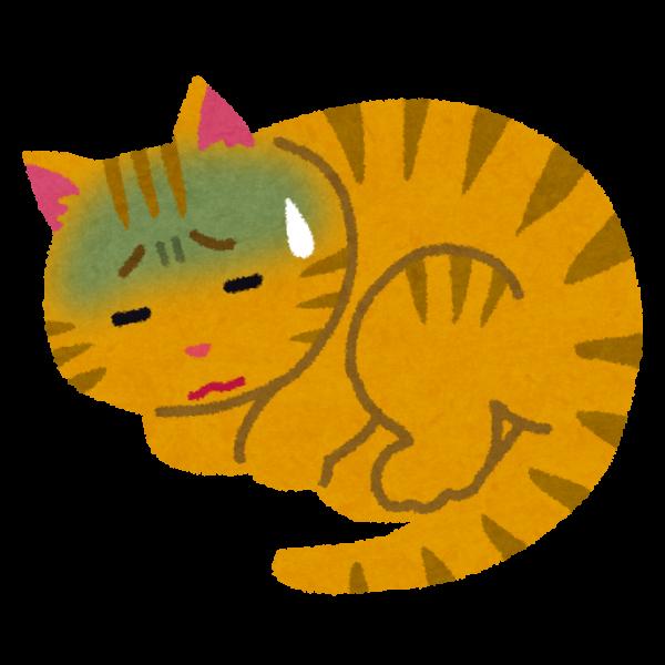 猫の種類、飼っている先住猫と相性の良い組み合わせ