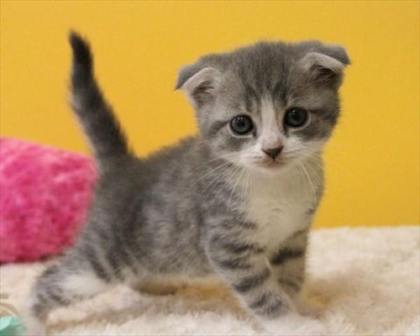 初心者必見!猫カフェ常連さんが教える楽しみ方