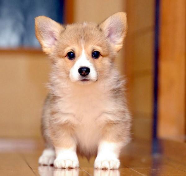 子犬を飼いたいときに知っておきたい7つのこと