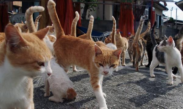 猫の種類でとっても似ているモノどうしとは?
