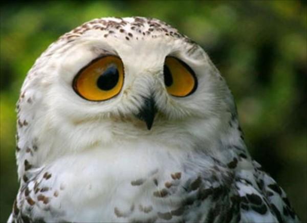 フクロウをペットするときの注意するべき7つの環境