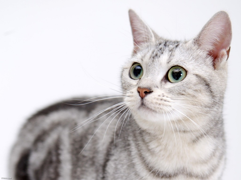 間違った猫の飼い方をしてない?見直すべき飼育法とは