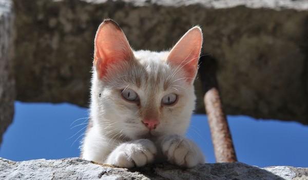 猫がかわいいのは当たり前!猫好きさんが激白するその理由