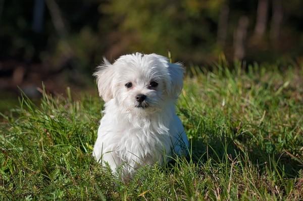 犬の里親になってみたい人が知っておくべき6つのこと