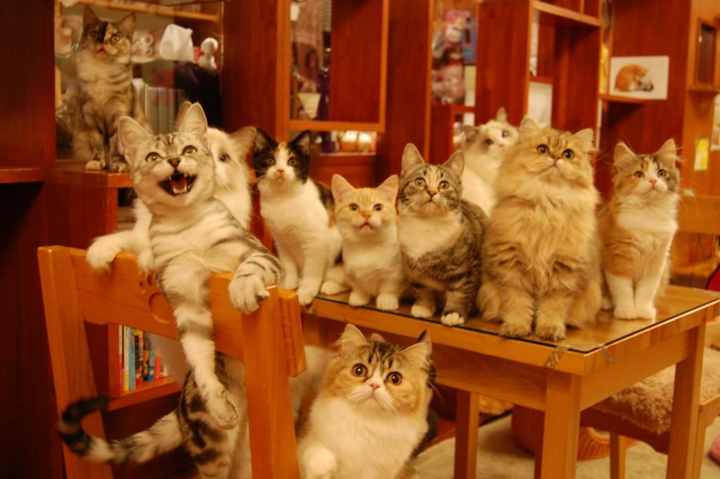 猫カフェ事情☆日本と海外の違いとは?