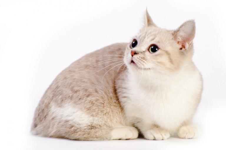 可愛い猫画像を撮るのに準備しておきたい機材とは