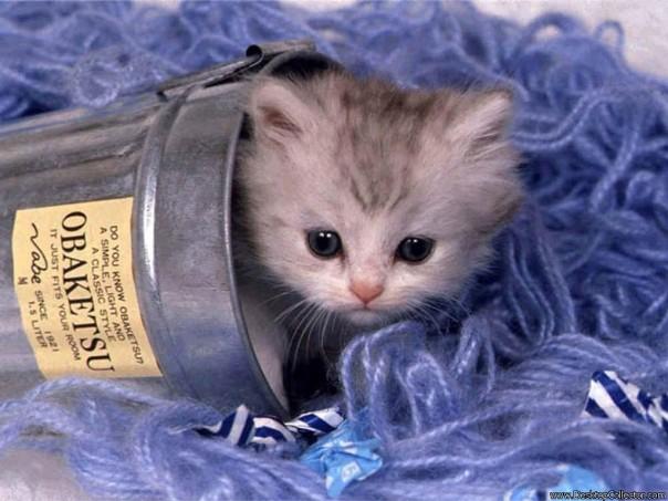 缶に入った子猫ちゃん