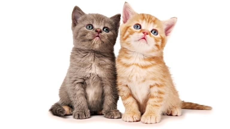 猫が可愛いと思うなら絶対見てほしい画像11選