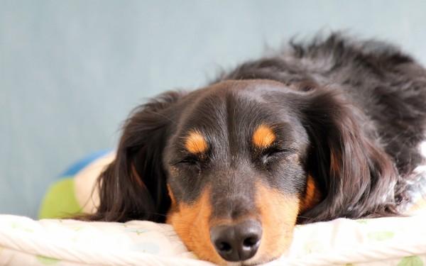 子犬を飼うと幸せになれるという法則を徹底検証