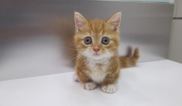 猫の里親になりたい人が注意したい5つのこと