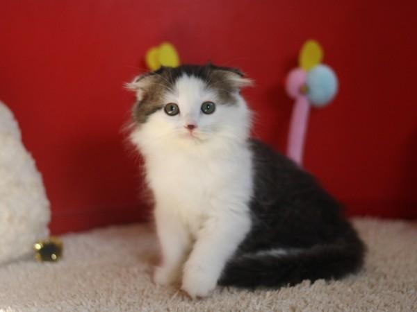 可愛い猫画像を撮影する時に準備しておきたい道具と環境