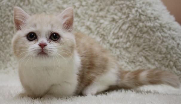 猫カフェデビュー☆口コミから自分にあったお店を探す方法