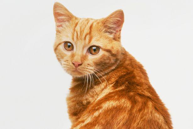 猫の画像でかわいいものだけ11連発見せちゃいます