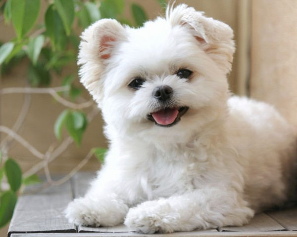 犬の里親を探すときに注意すべきところとは?