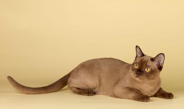 育て方で変わる?猫の寿命がのびる7つの食事と運動