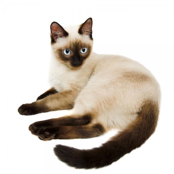 猫の種類で大好きなもの7種集めました。