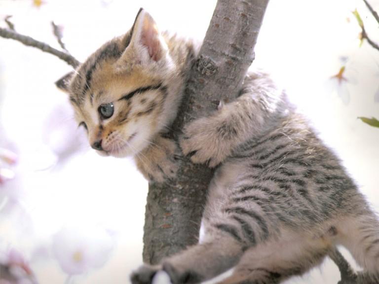 猫の年齢。生まれも育ちも知らない猫の調べ方