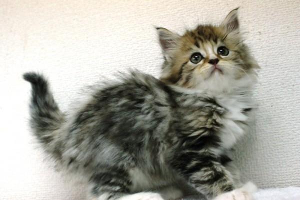 子猫のうちはこんなに可愛い!