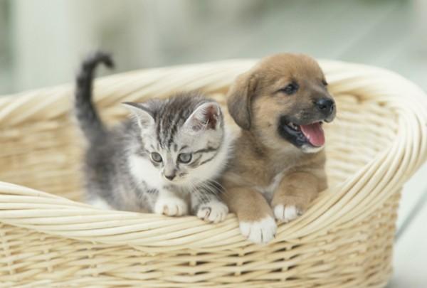 子犬を飼う前に知っておくべき7つの情報