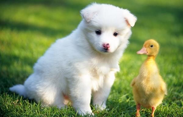 里親募集中の犬を引き取って育てる際の注意点