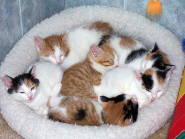 たくさんの日本猫