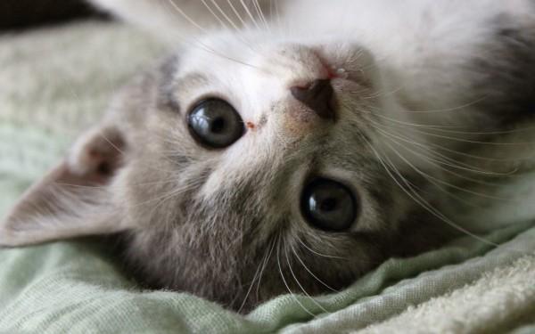 可愛い猫画像を撮影するときに知っておくべき5つのこと