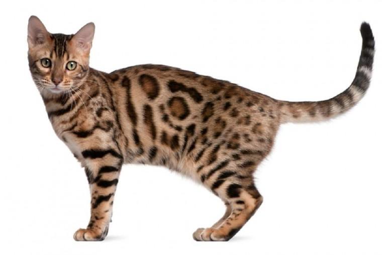 おもしろ猫画像が好きな人へ11つの画像