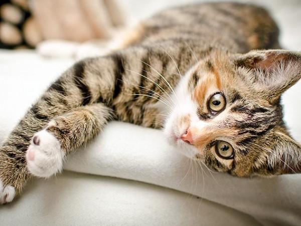子猫の里親になるには?整えたい家の環境