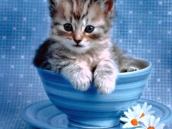 お茶碗に入った猫