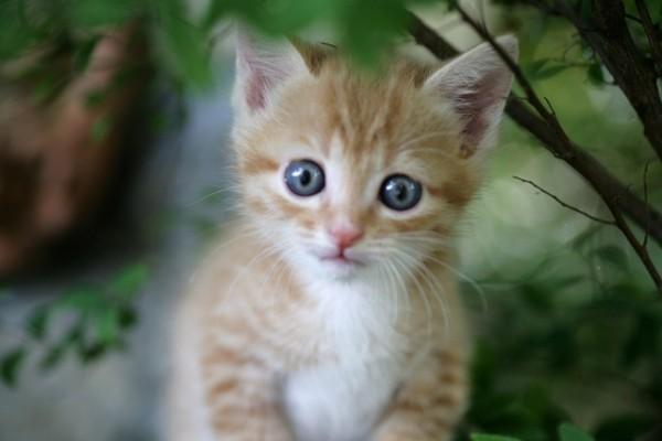 猫の動画を撮るときに気を付けたい5つのポイント